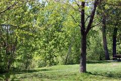 Beau parc le long de rivière Photographie stock