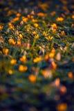 Beau parterre jaune tiré avec une macro fin de lentille dans une belle lumière molle photographie stock libre de droits