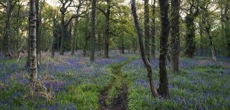 Beau paysage anglais de campagne au-dessus des champs aux WI de coucher du soleil Photos stock