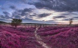 Beau paysage anglais de campagne au-dessus des champs aux WI de coucher du soleil Photo stock
