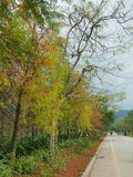 Beau paysage - automne Image stock