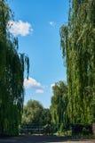 Beau paysage avec de grands saules pleurants Photo stock