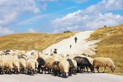 Beau paysage avec le ciel bleu, les nuages blancs, la prairie jaune et le troupeau de moutons Les Balkans, Monténégro Image libre de droits