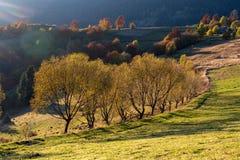 Beau paysage avec les arbres magiques d'automne photographie stock