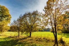 Beau paysage avec les arbres magiques d'automne et les feuilles tombées dans les montagnes photographie stock libre de droits