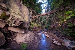 Beau paysage avec les arbres, les roches et la rivière tombés dans Carpat Photographie stock