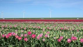 Beau paysage avec les tulipes roses contre le ciel (Ba naturel banque de vidéos
