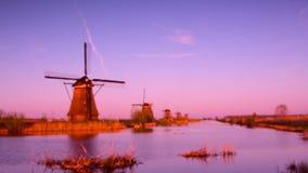 Beau paysage avec les tulipes roses contre le ciel (Ba naturel clips vidéos