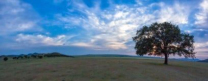 Beau paysage avec un chêne isolé dans le coucher du soleil et les nuages dramatiques images stock