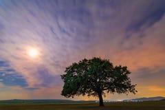 Beau paysage avec un chêne isolé, des nuages dramatiques et un ciel nocturne étoilé avec la lumière de lune photos libres de droits
