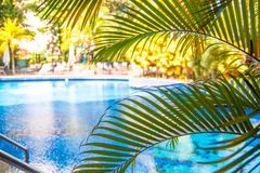 Beau paysage avec une piscine dans l'hôtel avec des palmiers photos stock