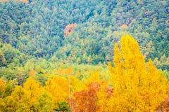 Beau paysage beaucoup d'arbre avec la feuille colorée autour de la montagne photographie stock libre de droits