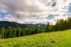Beau paysage carpathien en automne tôt photo libre de droits