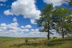 Beau paysage d'été avec des champs et des arbres de peuplier grandissants isolés photos stock