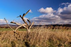 Beau paysage d'automne - arbre sec dans les domaines et le ciel nuageux photographie stock libre de droits