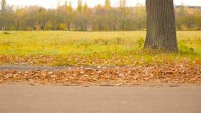 Beau paysage d'automne avec l'herbe verte et les feuilles brunes La caméra déplace parallèle à la route vers la gauche banque de vidéos
