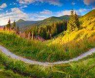 Beau paysage d'automne dans les montagnes avec les fleurs roses images libres de droits