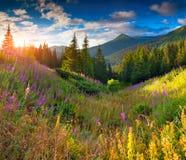 Beau paysage d'automne dans les montagnes avec les fleurs roses S images stock