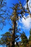 Beau paysage d'automne en parc de glaciers de Hailuogou Images stock