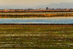 Beau paysage d'herbe et de ciel Donana, Andalousie, Espagne Images stock