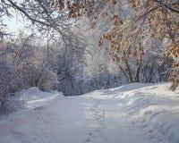 Beau paysage d'hiver au Minnesota photo stock
