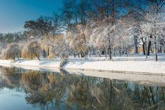Beau paysage d'hiver avec la neige et les arbres frais en parc Image stock