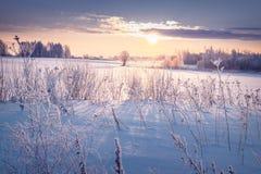 Beau paysage d'hiver avec le Soleil Levant dans le domaine couvert de neige Photos stock