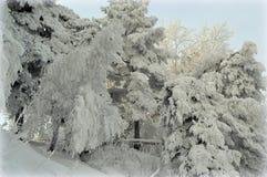 Beau paysage d'hiver dans la forêt Photo libre de droits