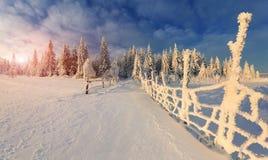 Beau paysage d'hiver dans la forêt de montagne Photos libres de droits