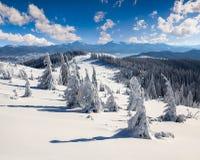 Beau paysage d'hiver dans les montagnes carpathiennes Photo stock