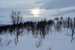 Beau paysage d'hiver de montagne dans la région sauvage de cercle arctique avec de petits arbres de bouleau de montagne et soleil Photographie stock libre de droits