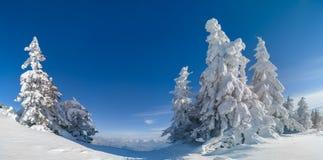 Beau paysage d'hiver de panorama des arbres impeccables couverts dans la chute de neige importante, de ciel bleu clair bon pour l images stock
