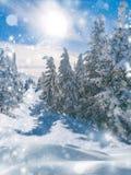 Beau paysage d'hiver des arbres impeccables couverts dans la chute de neige importante, de soleil brillant haut dans la chute de  photos stock