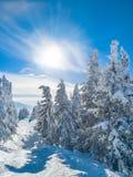 Beau paysage d'hiver des arbres impeccables couverts dans la chute de neige importante, de soleil brillant haut dans le ciel r image stock