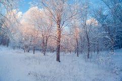 Beau paysage d'hiver, forêt neigeuse un jour ensoleillé, déformation d'oeil de poissons, arbres neigeux grands avec un ciel bleu photo libre de droits