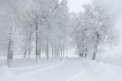 Beau paysage d'hiver pendant la tempête de neige Photos stock