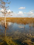 Beau paysage d'une nature avec des nuages au parc national de marais aux Etats-Unis Endroit populaire pour des touristes Photos stock