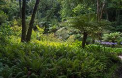 Beau paysage dans le sintra de parc national photos stock