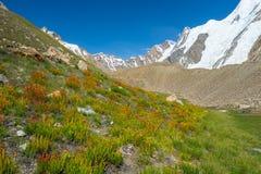 Beau paysage de camp de Khuspang en été avec la fleur sauvage image libre de droits