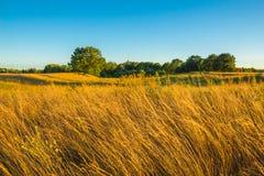 Beau paysage de campagne avec l'herbe et un arbre isolé dedans Photos stock