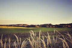 Beau paysage de champ dans le coucher du soleil dans la tonalité de vintage Images stock