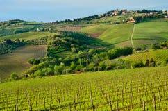 Beau paysage de chianti, Toscane images stock