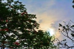 Beau paysage de ciel Image stock