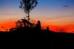 Beau paysage de coucher de soleil avec les silhouettes foncées de l'homme et de l'enfant s'asseyant sur des branches d'arbre Photographie stock libre de droits