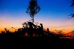Beau paysage de coucher de soleil avec les silhouettes foncées de l'homme et de l'enfant s'asseyant sur des branches d'arbre Photos stock