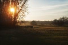 Beau paysage de coucher du soleil brillant par des arbres sur beau Photographie stock libre de droits