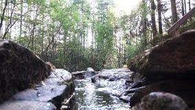 Beau paysage de courant de rivière de forêt de montagne au-dessus de fond lumineux de ciel longueur Vue haute étroite de lisse et banque de vidéos