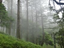 Beau paysage de forêt avec l'envionment brumeux images stock