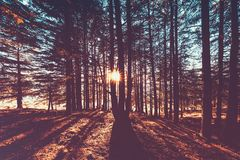 Beau paysage de forêt d'automne image libre de droits