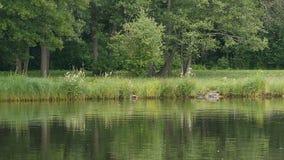 Beau paysage de forêt reflété dans l'eau calme banque de vidéos